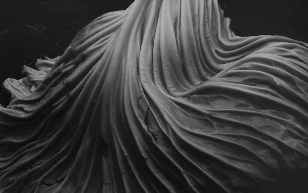 Apresentando Edward Weston